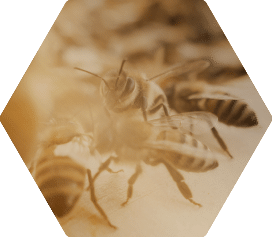 Queen Bees & Bee Stock