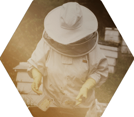 Beginner Beekeeping Course