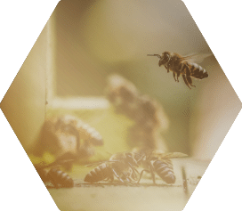 Bees in the News