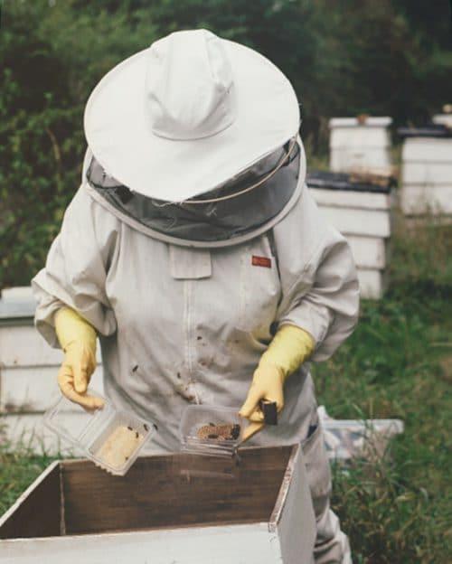Beginner Beekeeper Course - Campbell's Gold