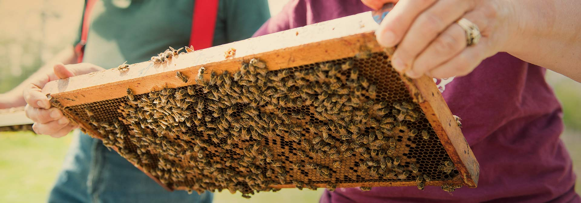 Bees - Campbell's Gold