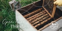 Campbells Gold Workshop - Open Hive Thursdays