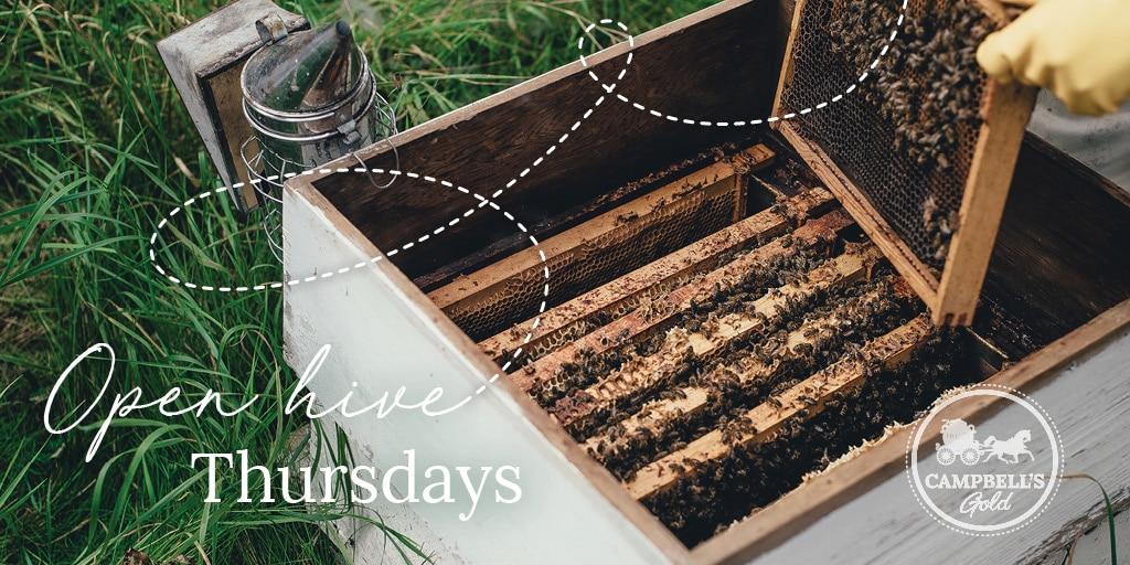 Campbells Gold Workshop - Open Hive Thursdays