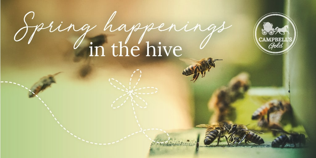 Campeblls Gold Workshop - Spring Happenings in the Hive